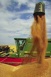 Even family farms can benefit from an updated business plan.