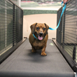 Canine Cardio Summer Camp for Dogs Helps Fight Pet Obesity at Morris...