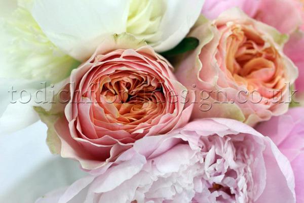 Eustoma Freesia Cut Flowers
