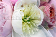 Florists London Flowers24hours offer flowers delivery london and flower delivery UK. Order flowers online london and send flowers online london with top quality london flowers same day delivery company – top flower shops in london. Flower delivery in lond