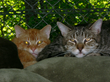Shelter cats lounging at the Hudson Valley SPCA in New Windsor, NY. The animal shelter was presented with a $20,000 check from The Libman Company.