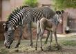 Association of Zoos and Aquariums, Zebra Pen Corporation Announce...