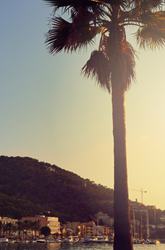 Hunter Traveller Mallorca