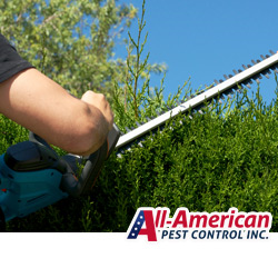 nashville home pest proofing