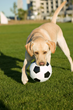 Going 'Fur' World Cup Gold: What Country is That Dog from