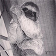 Guests at Tulemar Resort Help Rescue Abandoned Baby Sloth