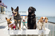 """Cruise with Your Favorite Four Legged Pal at the 10th Annual """"Dog Day on the Bay"""", Benefitting the San Francisco SPCA's Puppy Dog Tales Reading Program"""