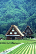 Traditional Japanese farmhouses in Shirakawago