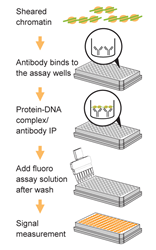 Schematic procedure of the Pre-Sure ChIP Antibody Validation Kit.