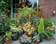 Container gardens can be strategically placed to dress up areas of the landscape.