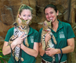 African Serval Kittens Debut in New Presentation This Summer at Naples...