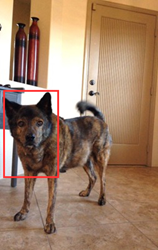 Pet Doorbell App