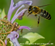 Bees Play an Important Role with the Plants We Grow