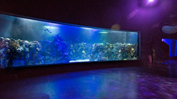 Elevators open to this beautiful tank featuring R-Cast® acrylic. The 33-foot long panel holds a unique 35° arc and gives views to native coral and vibrant colorful fish.