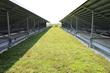 Kipling Acres LiveRoof Deck View