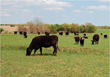 Patch-Burning Method to Promote More Sustainable Grazing Lands