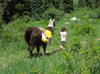 New wildlife viewing lodging and tour package from Antlers at Vail includes llama trekking (courtesy of Paragon Guides).