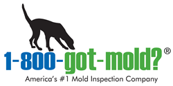 Mold inspection, mold testing and mold remediation consulting in NJ, NYC, PA