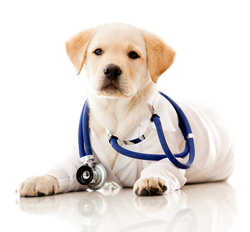 Countryside Veterinary - Dog in Vet outfit