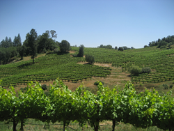 This property, Underwood Vineyards, was just listed for $9.9 million by Alex West of Chase International.