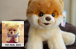 Online Life Insurance Quote Service Offers Gratis Boo the Dog Plush...