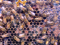 Little honey bees can be big business.