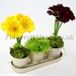 Flower delivery UK - Sunshine and Shadows - Summer flower centrepieces and table arrangements designed by top London florists.