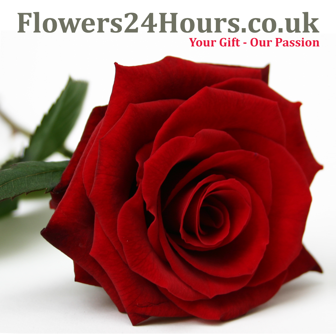Flowers24hours s new range of beautifully scented flowers available for c