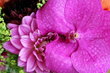 Purple flowers UK online by Flower24hours - same day flowers London and next day flowers uk