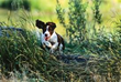 While dogs seem immune to poison ivy, they can have urushiol on their fur and transfer it to their owners
