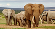 Savings on the Savanna: Africa Experts Send Travellers on Safari for...