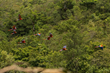 The Scarlet Macaw Flies Free in Los Tuxtlas, Veracruz by Experiencias Xcaret