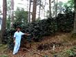 Honduran coffee farmer David Lopez with coffee plants