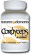 Cordyceps - Support For The Immune System