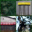 Lemur Conservation Foundation Funds a Boundary Demarcation Project in...