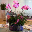 Orchid Trio Flowers for delivery and flowers by delivery by Flowers24hours.co.uk UK gifts online gift shop for same day flower London