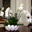 White Orchids by UK florists Flowers24hours.co.uk Flowers UK and same day flower delivery London Florist delivery and UK gift shop.