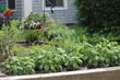 The herb garden in bloom at The Village at Duxbury, a senior living community, featuring independent living apartments, Garden Homes and assisted living.