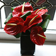 red-anthurium-exotic-vase-arrangement-flowers3-350