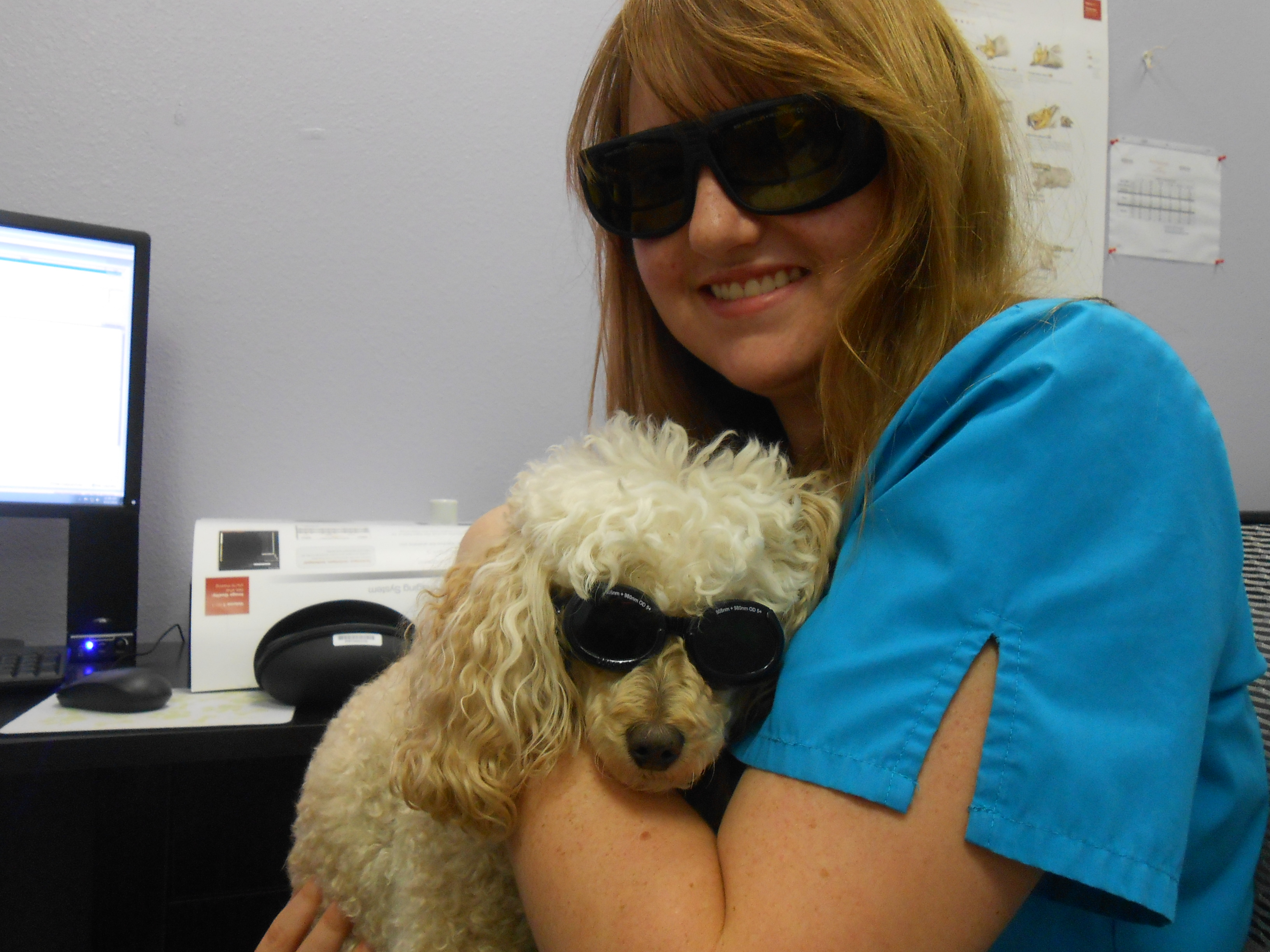 fort collins veterinarian offers innovative laser therapy