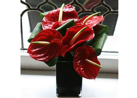London florist Flowers24Hours displays a veritable ode to anthurium on florist books, florist bowls, florist centerpieces, florist containers, florist tools,