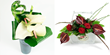 Flowers UK. Anthurium plants Anthurium flowers an Anthurium flower plants delivery UK London by top UK florists and same day flowers delivery
