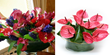 UK gifts Anthurium plants Anthurium flowers an Anthurium flower plants delivery UK London by top UK florists and same day flowers delivery shop