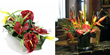 UK gifts. Anthurium plants Anthurium flowers an Anthurium flower plants delivery UK London by top UK florists and same day flowers London