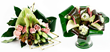 Anthurium plants London Anthurium flowers an Anthurium flower plants delivery UK London by top UK florists and same day flowers UK