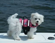PetFirst Provides Lakeside Health and Safety Tips for Your Dog