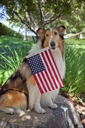 Best Friends Animal Society, Lassie, Dog safety, Pet Safety, 4th of July, Independence Day, fireworks, summer