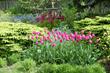 Jewell Gardens, a Certified Organic Show Garden: A Dazzling Summer...