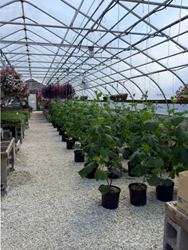 Northpoint Greenhouse Series