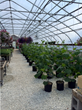 Rimol Greenhouses Celebrates 15-Year Anniversary of its First...
